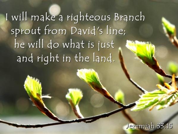 righteousbranch2