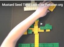 seedtimelapse