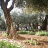 GethsemaneGarden